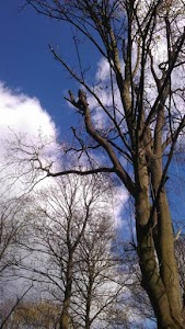 Birstall Tree Services