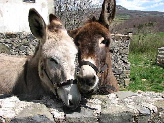 Massif Central Randonnées+ - Location Les ânes de Farfara
