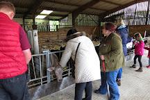 Longdown Activity Farm, Ashurst, United Kingdom