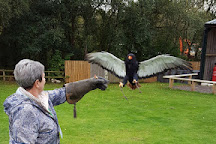 Cheshire Falconry, Northwich, United Kingdom