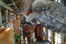 Santa Barbara Museum of Natural History Sea Center, Santa Barbara, United States