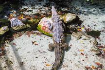 Delphinus Riviera Maya, Playa del Carmen, Mexico
