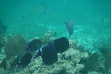 Mesoamerican Reef (Belize Barrier Reef), Belize