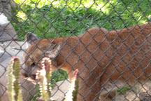 Orange County Zoo, Orange, United States
