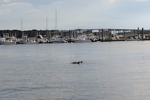 Dolphin & Nature Tour, Hilton Head, United States