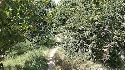 Rahmani Garden