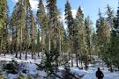 Tahoe Treetop Adventure Parks