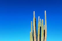 Valley of the Giants Valle de los Gigantos, Baja California, Mexico