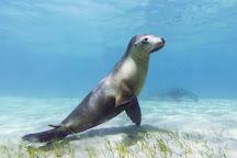 Baird Bay Ocean Eco Experience, Bairds Bay, Australia