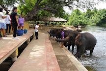 ElephantsWorld, Kanchanaburi, Thailand
