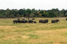 Wasgamuwa National Park, Polonnaruwa, Sri Lanka