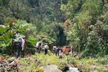 Yanacocha Reserve, Quito, Ecuador