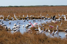 Down South Airboat Tours, Everglades City, United States