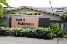 World Of Phalanopsis, Hulu Yam Lama, Malaysia