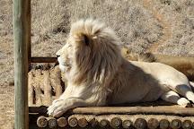 Cheetah Experience, Bloemfontein, South Africa