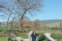 The Checche Oak Tree, Pienza, Italy