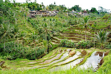 Tegalalang Rice Terrace, Tegalalang, Indonesia