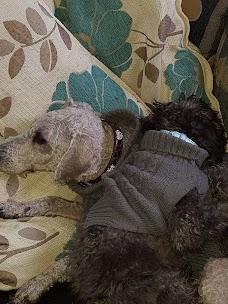 Pets at Home Pentland