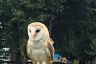 Imperial Bird of Prey Academy