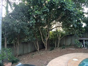 Brisbane Treeworx - Brisbane Tree Lopping