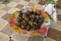Snail Farm and Fun, Tylissos, Greece