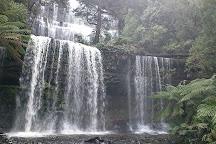 Forest Secrets, Mount Field National Park, Australia
