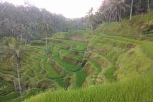 OKA Agriculture Bali, Bali, Indonesia