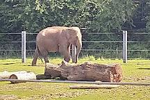 Twycross Zoo, Atherstone, United Kingdom