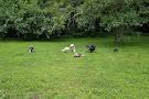 Long Island Game Farm Wildlife Park & Children's Zoo