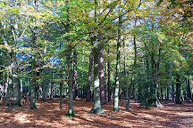 Thorndon Country Park, Brentwood, United Kingdom