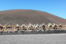 Camel Ride, Arrecife, Spain