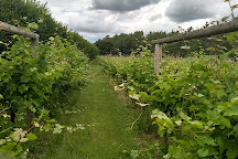 Dedham Vale Winery And Estate, Boxted, United Kingdom