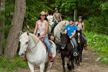 Carousel Horse Farm, Casco, United States