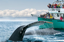 O'Brien's Whale and Bird Tours, Bay Bulls, Canada