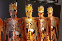 Body Worlds Museum - Anatomy of happiness, Heidelberg, Germany
