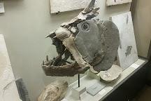 University of Wisconsin Geology Museum, Madison, United States