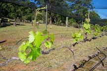 Long Point Vineyard, Lake Cathie, Australia