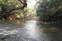 Nisargadhama Forest, Kodagu (Coorg), India