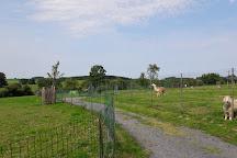 Animalaine, Bastogne, Belgium