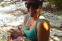 Lang Tengah Turtle Watch, Pulau Lang Tengah, Malaysia