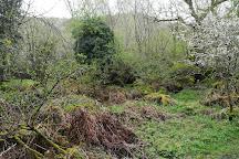 Garbutt Wood, Thirsk, United Kingdom