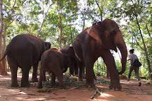 Save Elephant Foundation - Surin Project, Tha Tum, Thailand