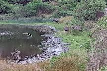 Tower Hill Wildlife Reserve, Warrnambool, Australia