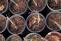 Perennial Vintners, Bainbridge Island, United States