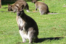 Willowbank Wildlife Reserve, Christchurch, New Zealand