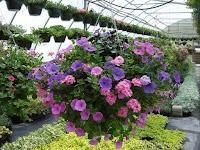 West Hills Greenhouses, Inc.