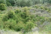 Nature Reserve of Westhoek, De Panne, Belgium