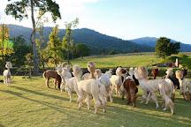 AlpacaHill, Suan Phueng, Thailand