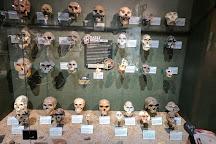 SKELETONS: Museum of Osteology, Orlando, United States