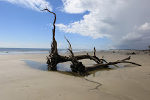 Barrier Islands Eco Tours, Isle of Palms, United States